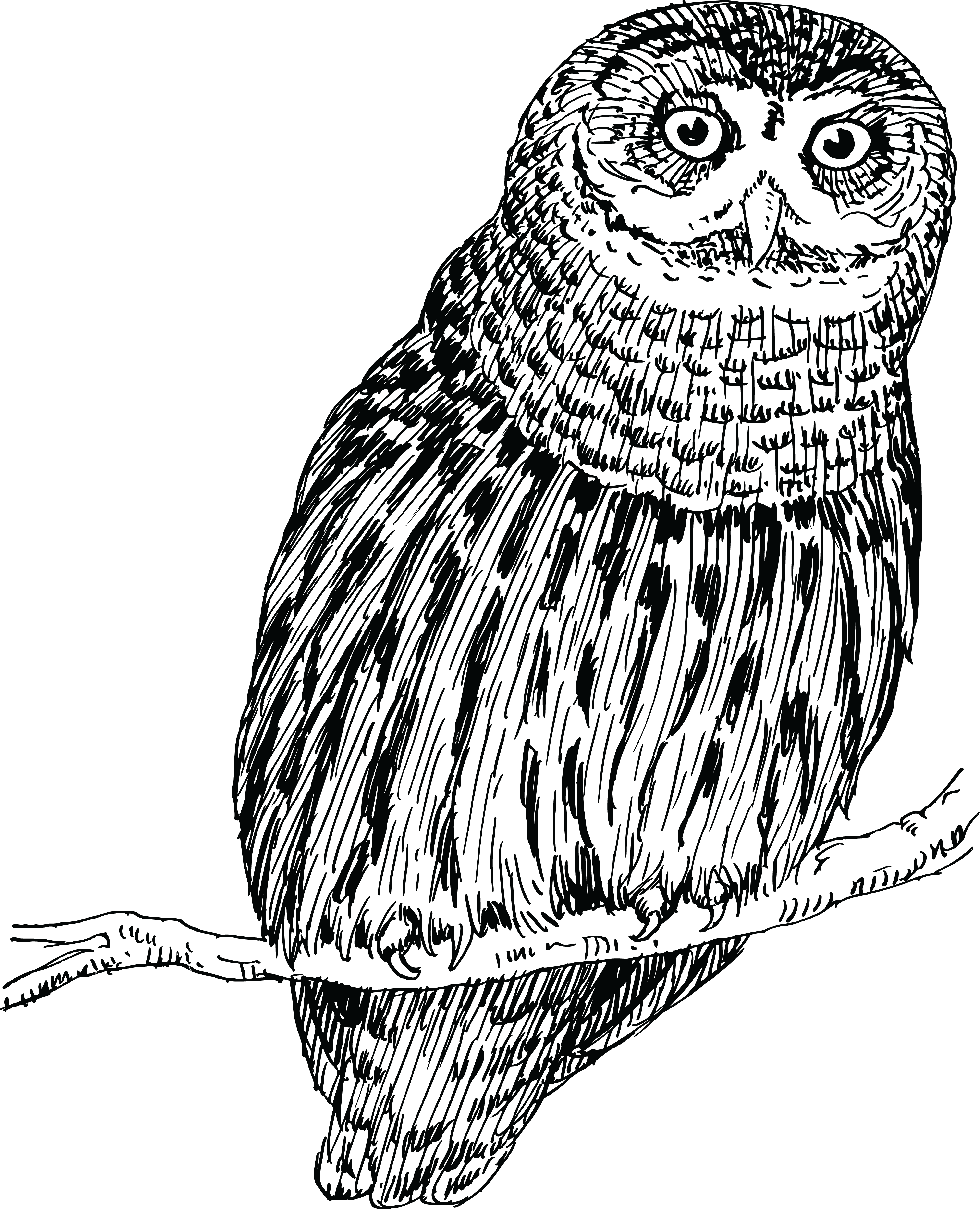 Great Grey Owl svg #8, Download drawings