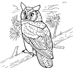 Great Horned Owl coloring #20, Download drawings