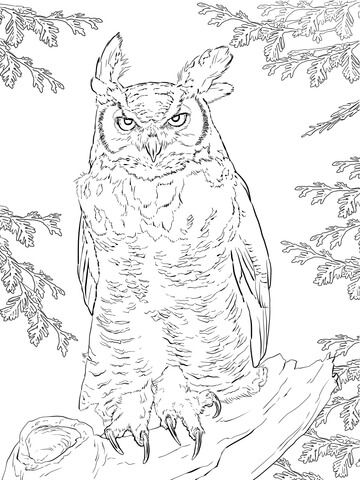 Great Horned Owl coloring #6, Download drawings