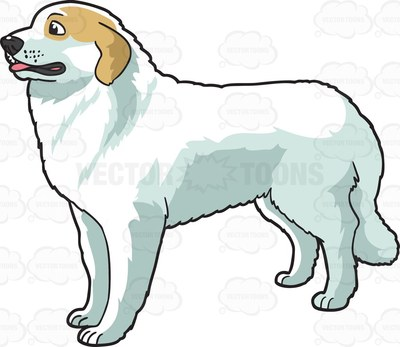 Great Pyrenees clipart #14, Download drawings