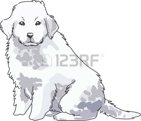 Great Pyrenees clipart #8, Download drawings