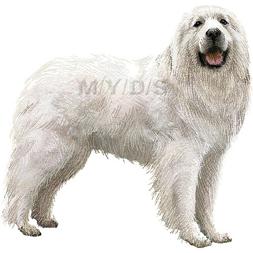 Great Pyrenees clipart #4, Download drawings