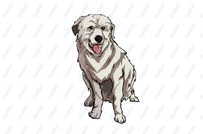 Great Pyrenees clipart #17, Download drawings