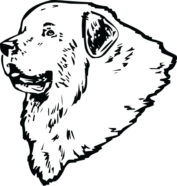Great Pyrenees clipart #10, Download drawings