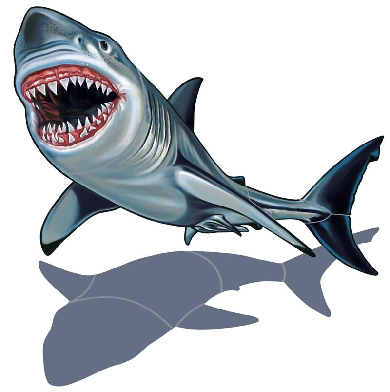 Great White Shark clipart #14, Download drawings