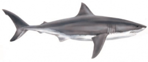Great White Shark clipart #3, Download drawings