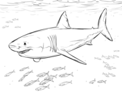 Great White Shark coloring #10, Download drawings