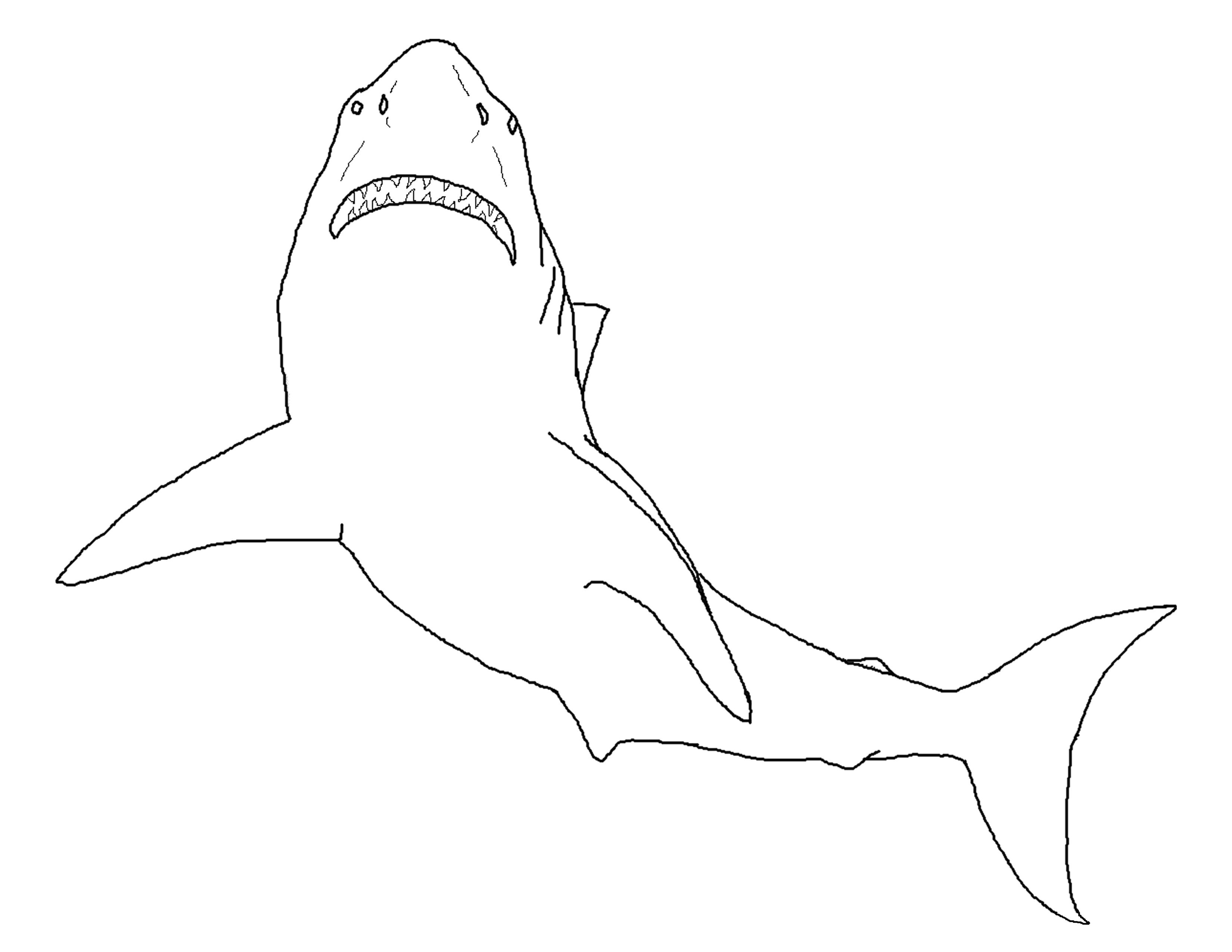 Great White Shark coloring #6, Download drawings