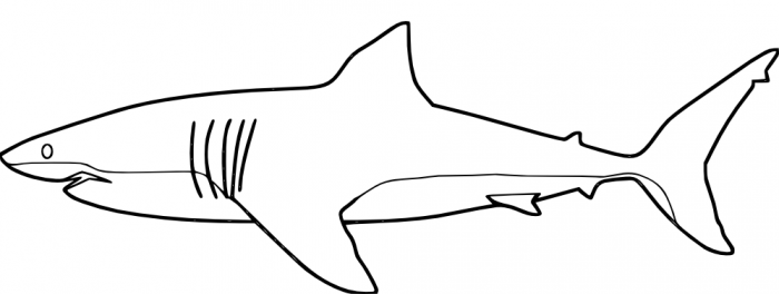 Great White Shark coloring #17, Download drawings