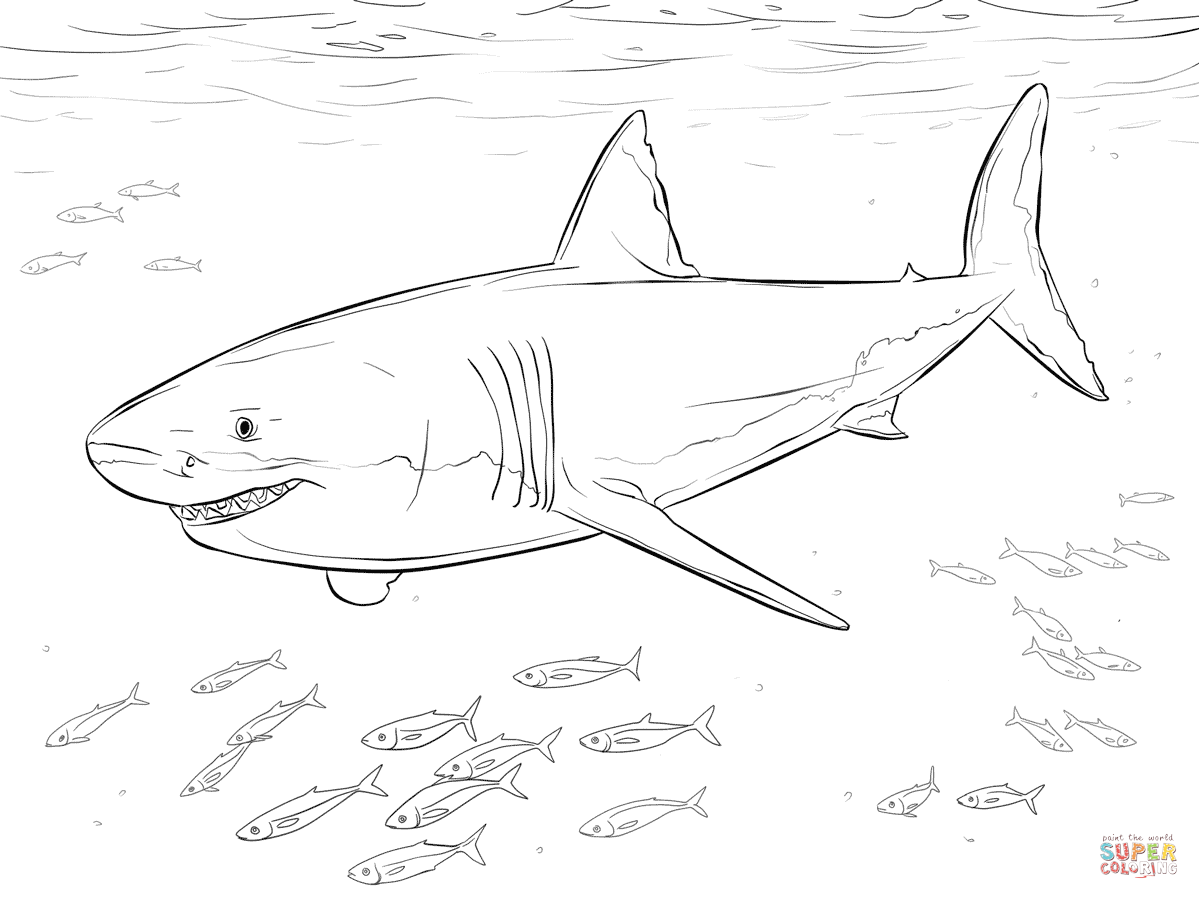 Great White Shark coloring #7, Download drawings