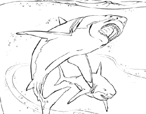Great White Shark coloring #2, Download drawings