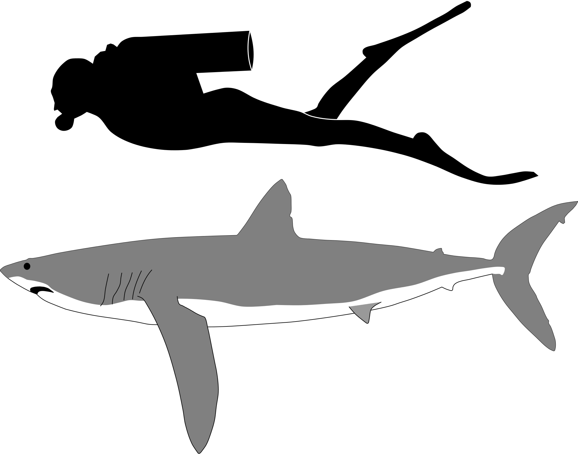 Great White Shark svg #8, Download drawings