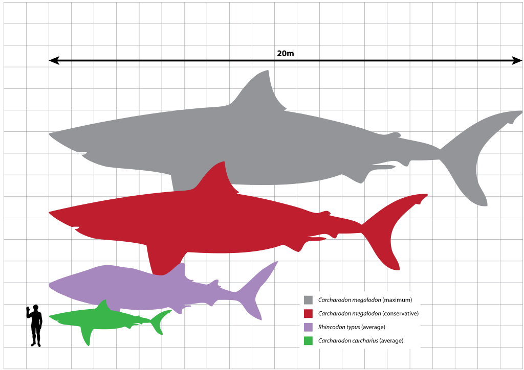 Great White Shark svg #1, Download drawings