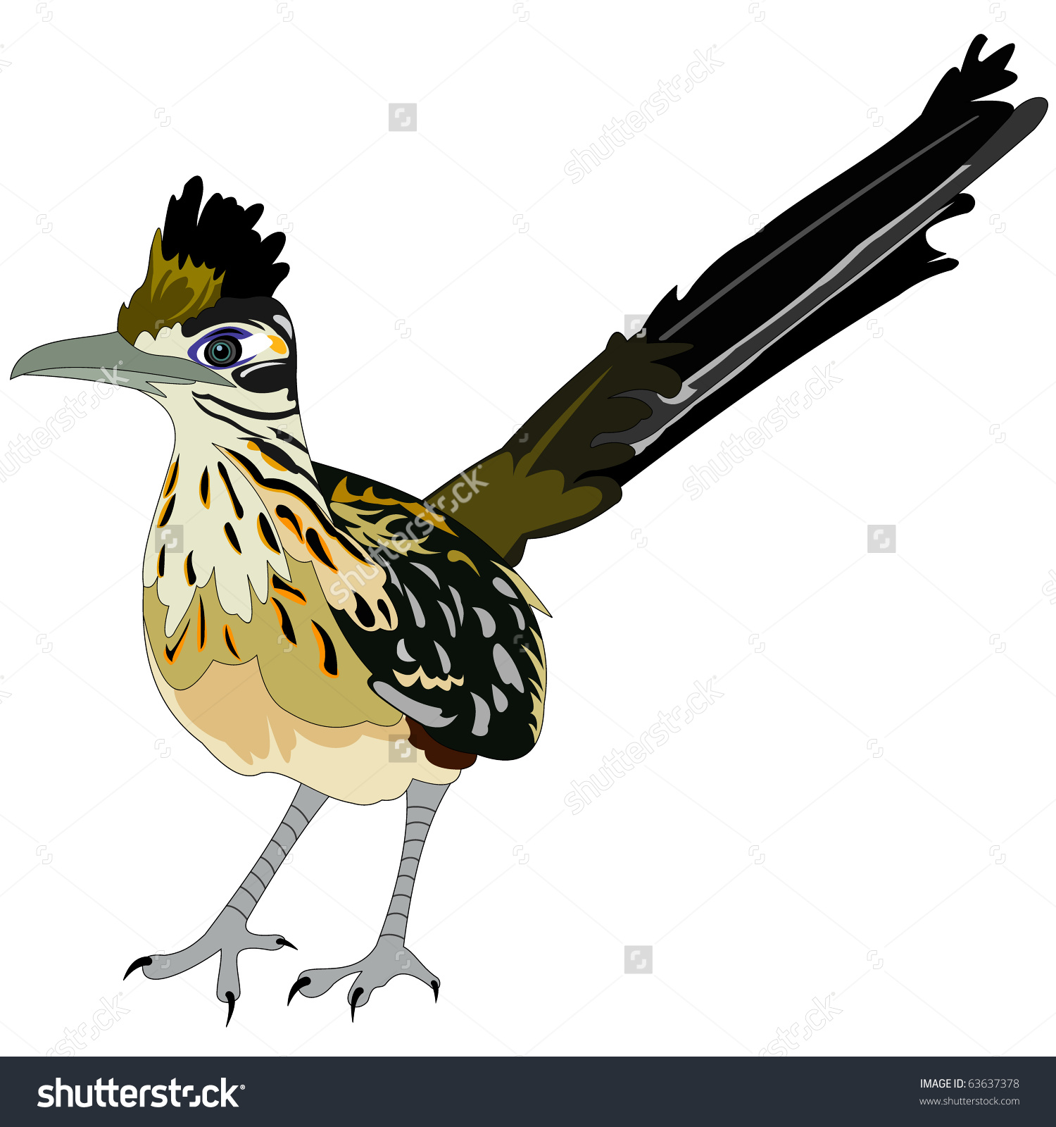 Greater Roadrunner clipart #13, Download drawings