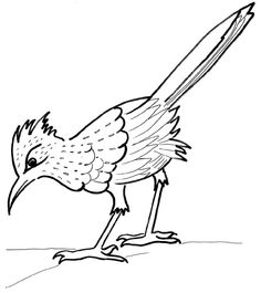 Greater Roadrunner clipart #9, Download drawings