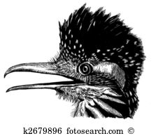 Greater Roadrunner clipart #1, Download drawings