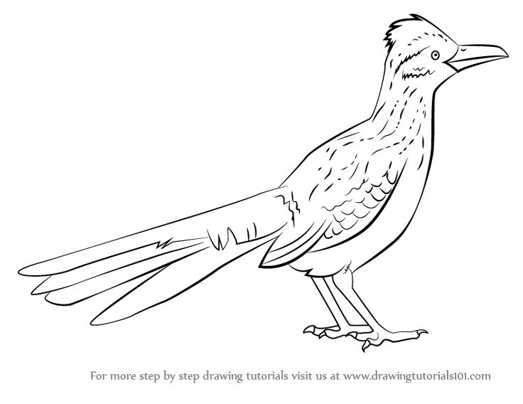 Greater Roadrunner clipart #7, Download drawings