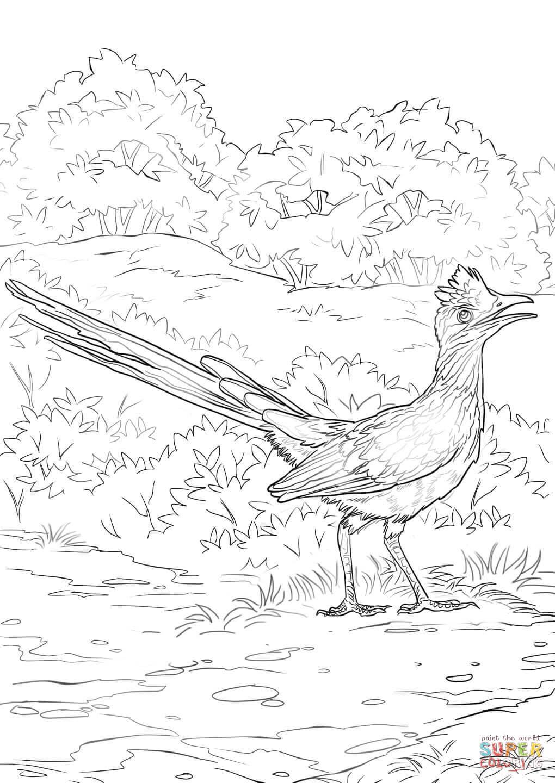 Greater Roadrunner coloring #5, Download drawings