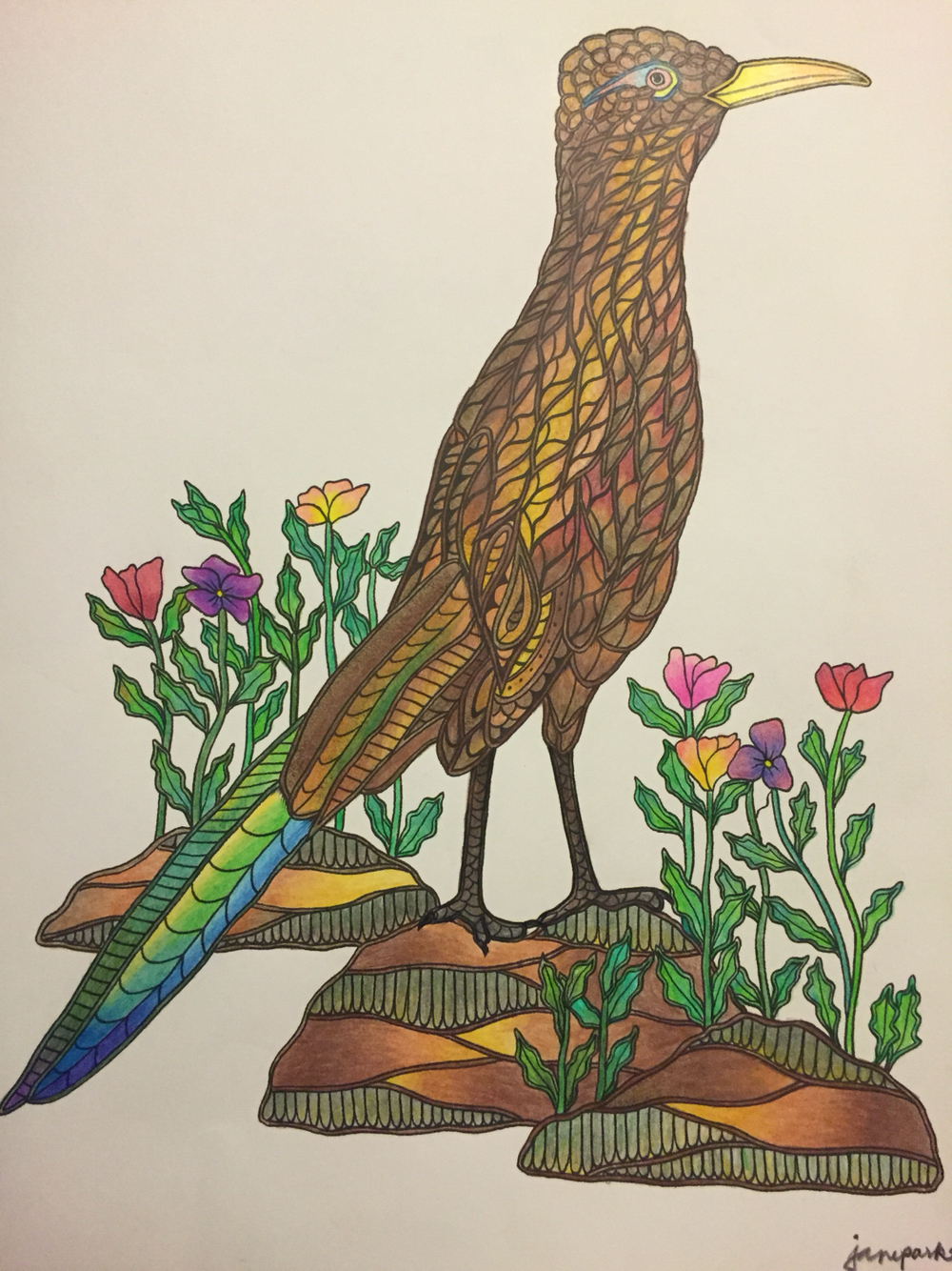 Greater Roadrunner coloring #4, Download drawings