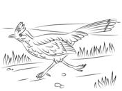 Greater Roadrunner coloring #8, Download drawings