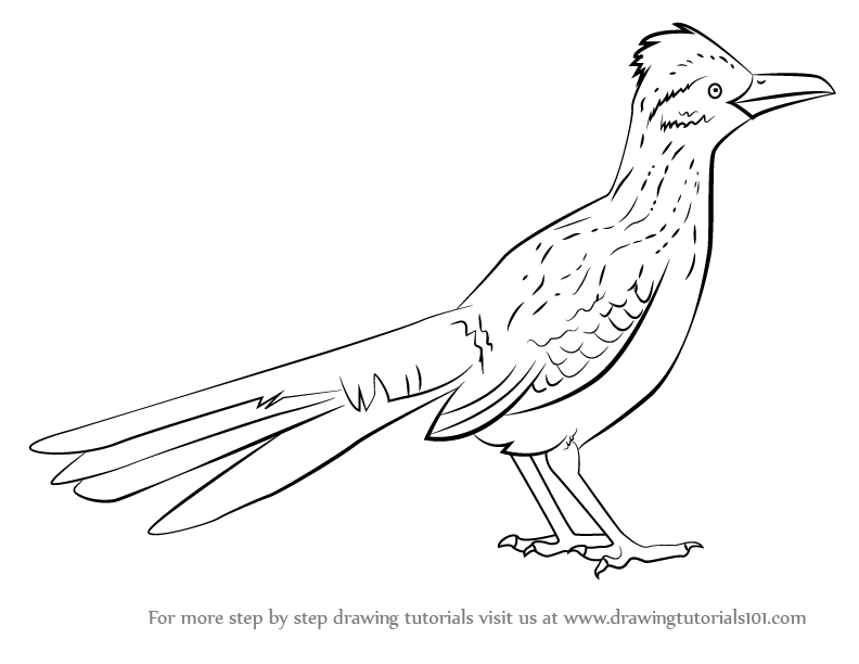 Greater Roadrunner svg #14, Download drawings