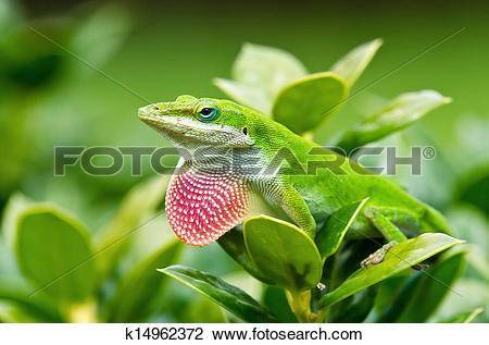 Green Anole clipart #5, Download drawings