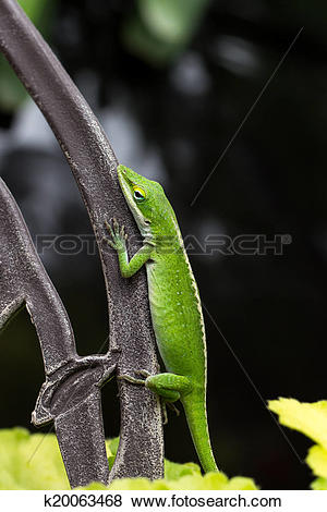Green Anole clipart #1, Download drawings