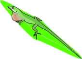 Green Anole clipart #9, Download drawings