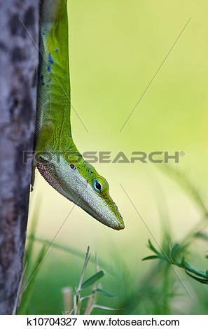 Green Anole clipart #4, Download drawings