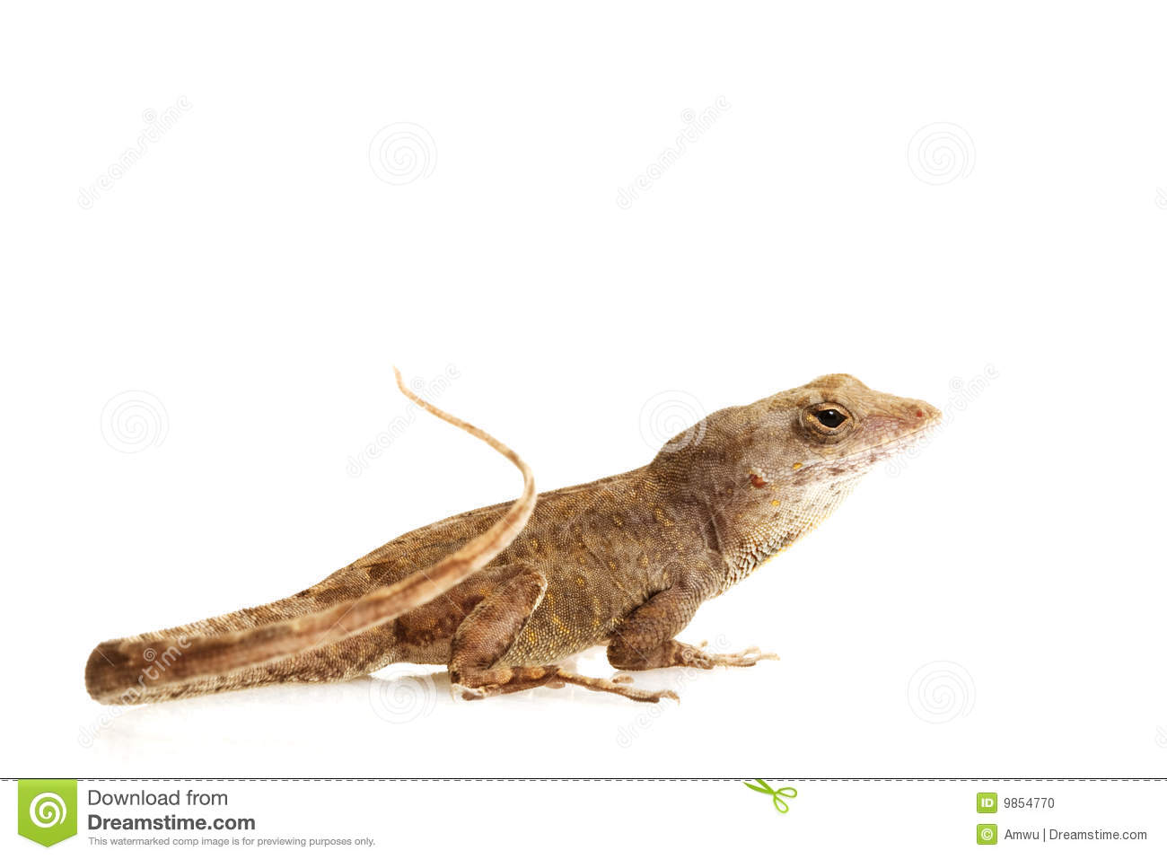 Green Anole clipart #15, Download drawings
