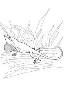 Green Anole coloring #11, Download drawings
