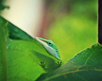 Green Anole svg #12, Download drawings