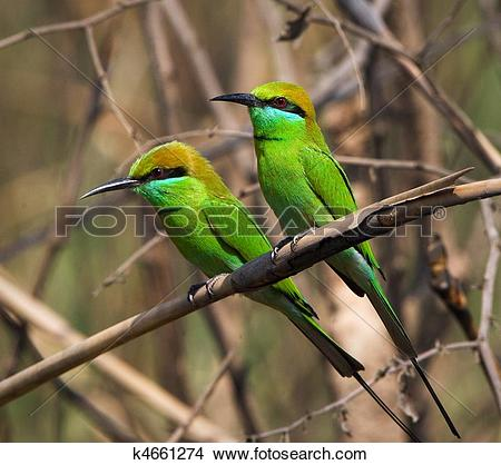 Green Bee-eater clipart #9, Download drawings