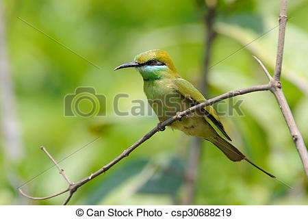 Green Bee-eater clipart #14, Download drawings