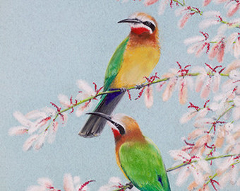 Green Bee-eater svg #3, Download drawings