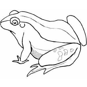 Green Frog coloring #3, Download drawings