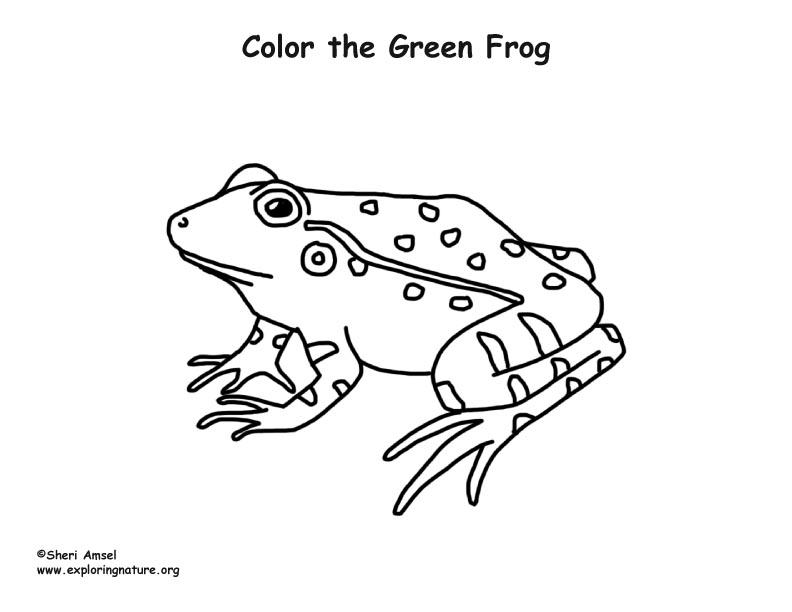Green Frog coloring #6, Download drawings