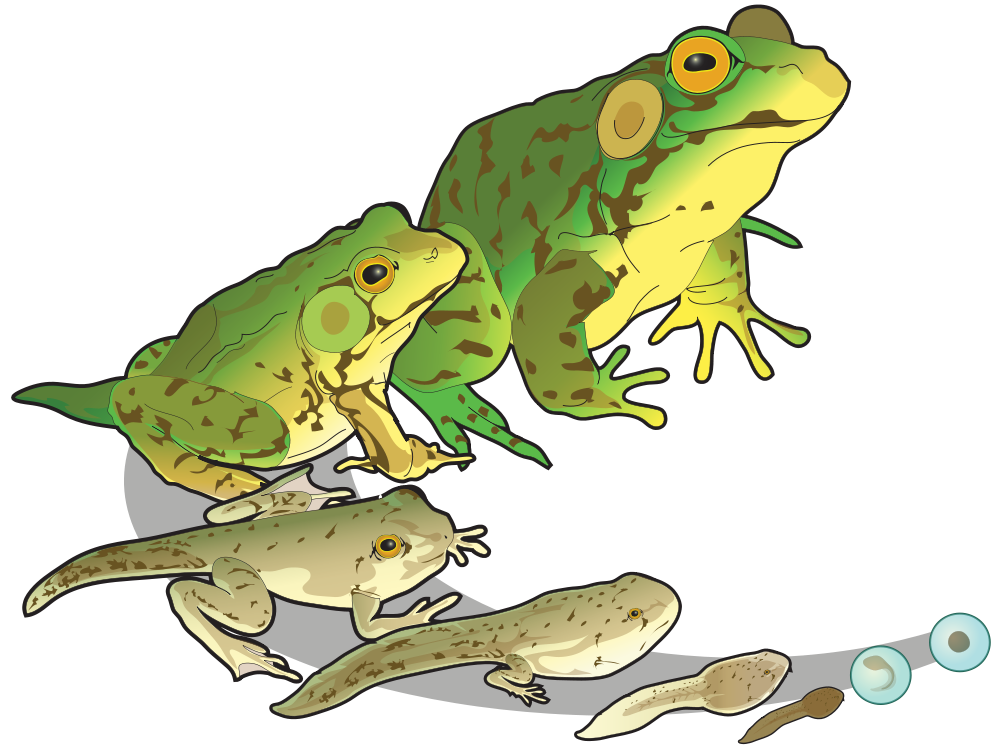 Green Frog svg #17, Download drawings