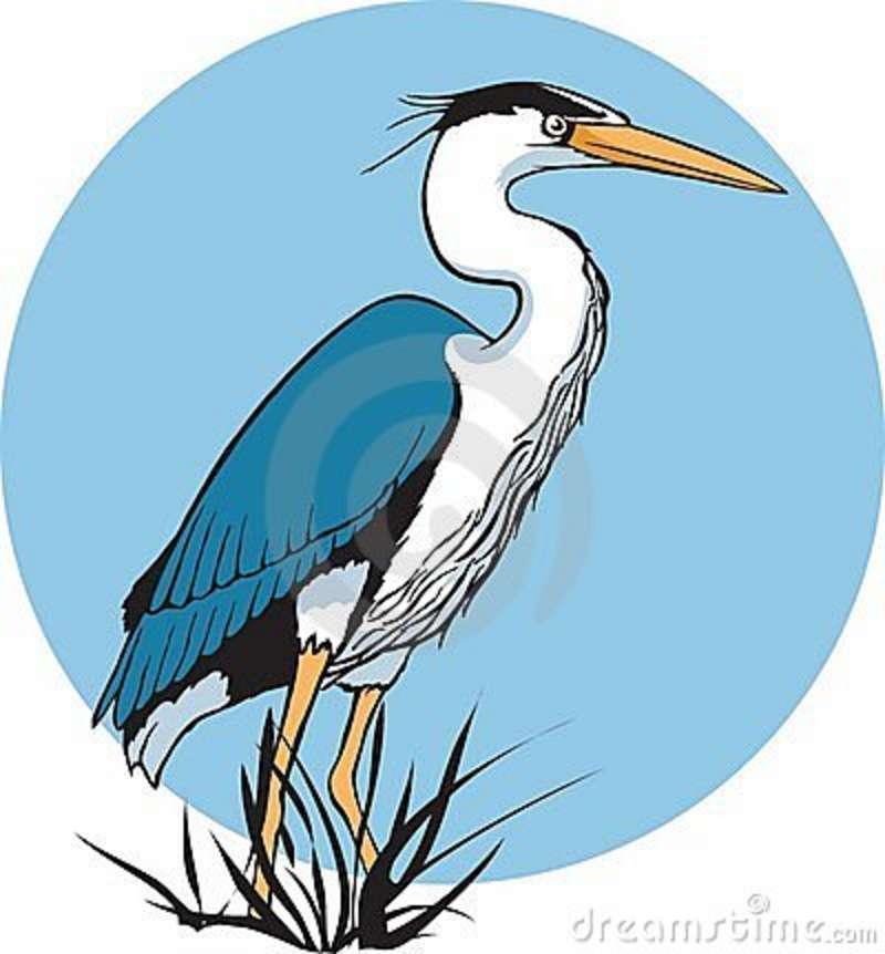 Green Heron clipart #11, Download drawings
