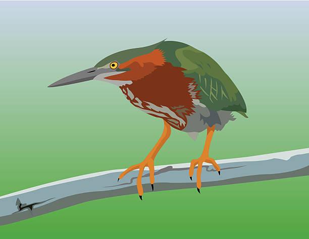 Green Heron clipart #1, Download drawings