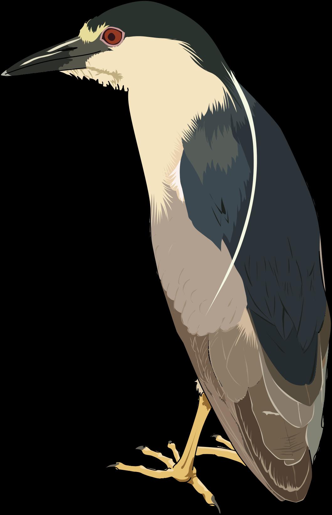 Green Heron svg #2, Download drawings