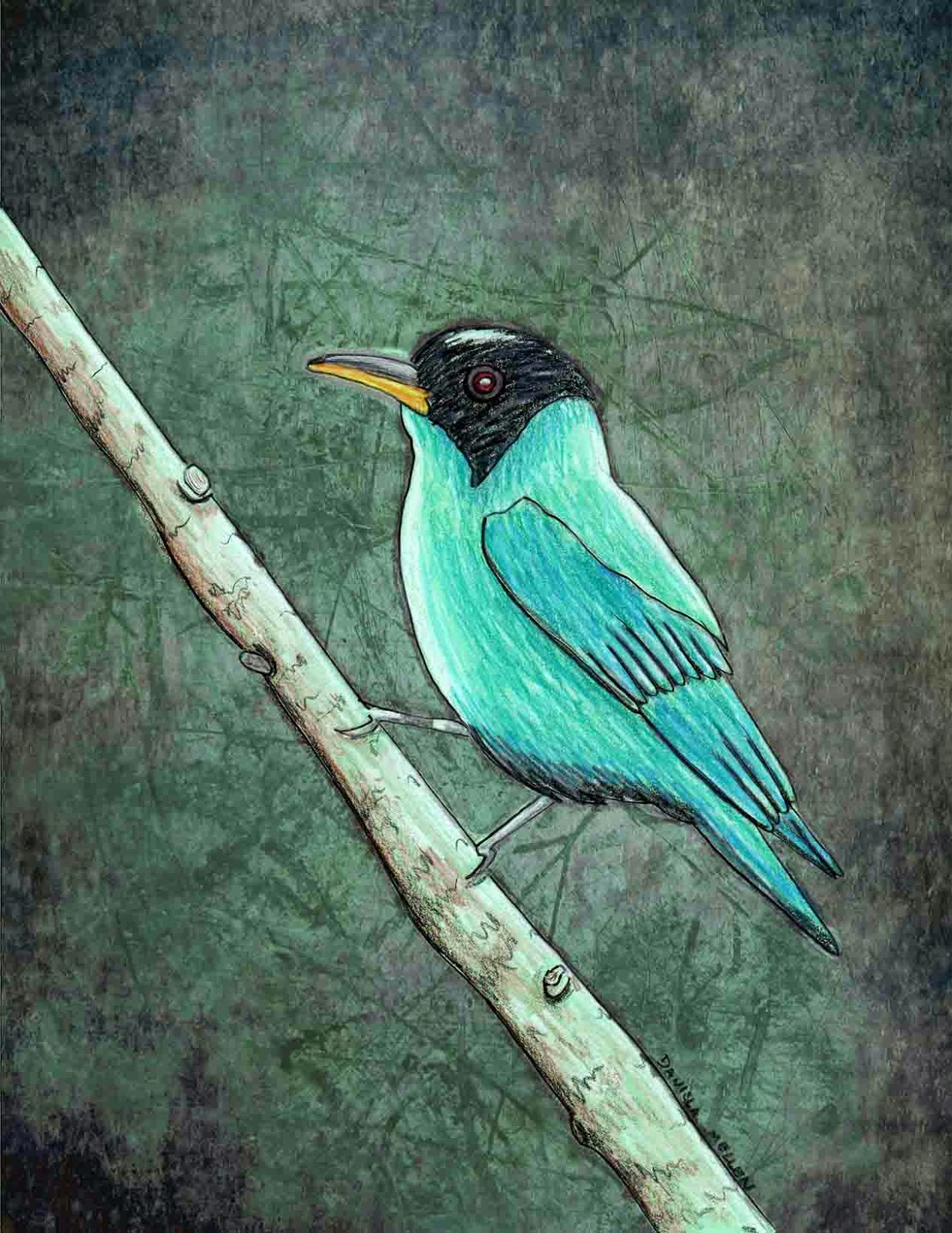 Green Honeycreeper coloring #6, Download drawings