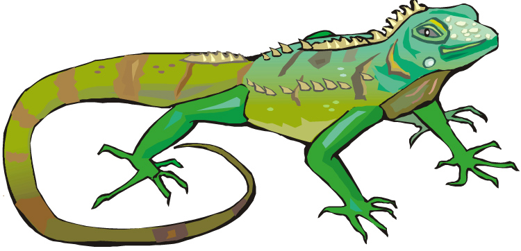 Green Iguana clipart #1, Download drawings