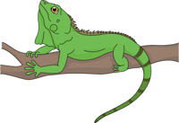 Iguana clipart #11, Download drawings