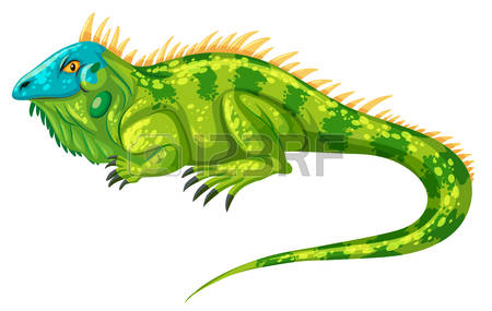 Green Iguana clipart #15, Download drawings
