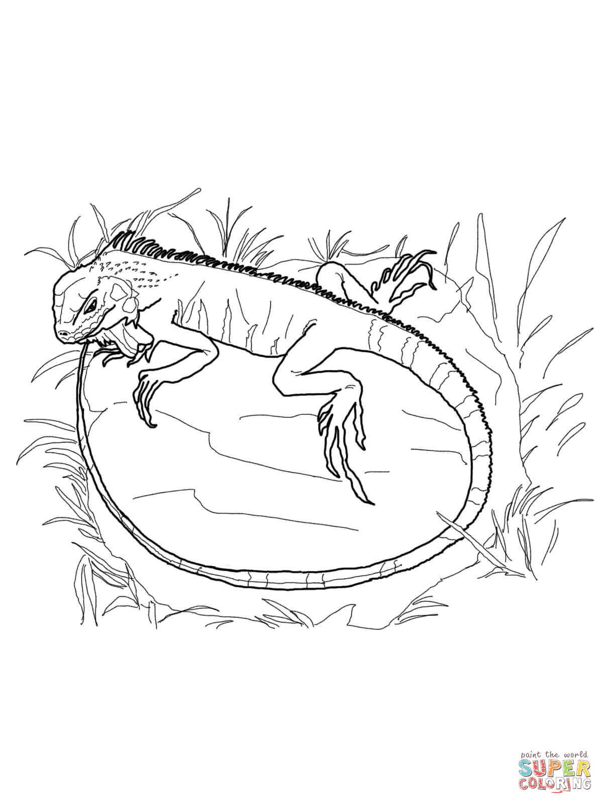 Green Iguana coloring #12, Download drawings