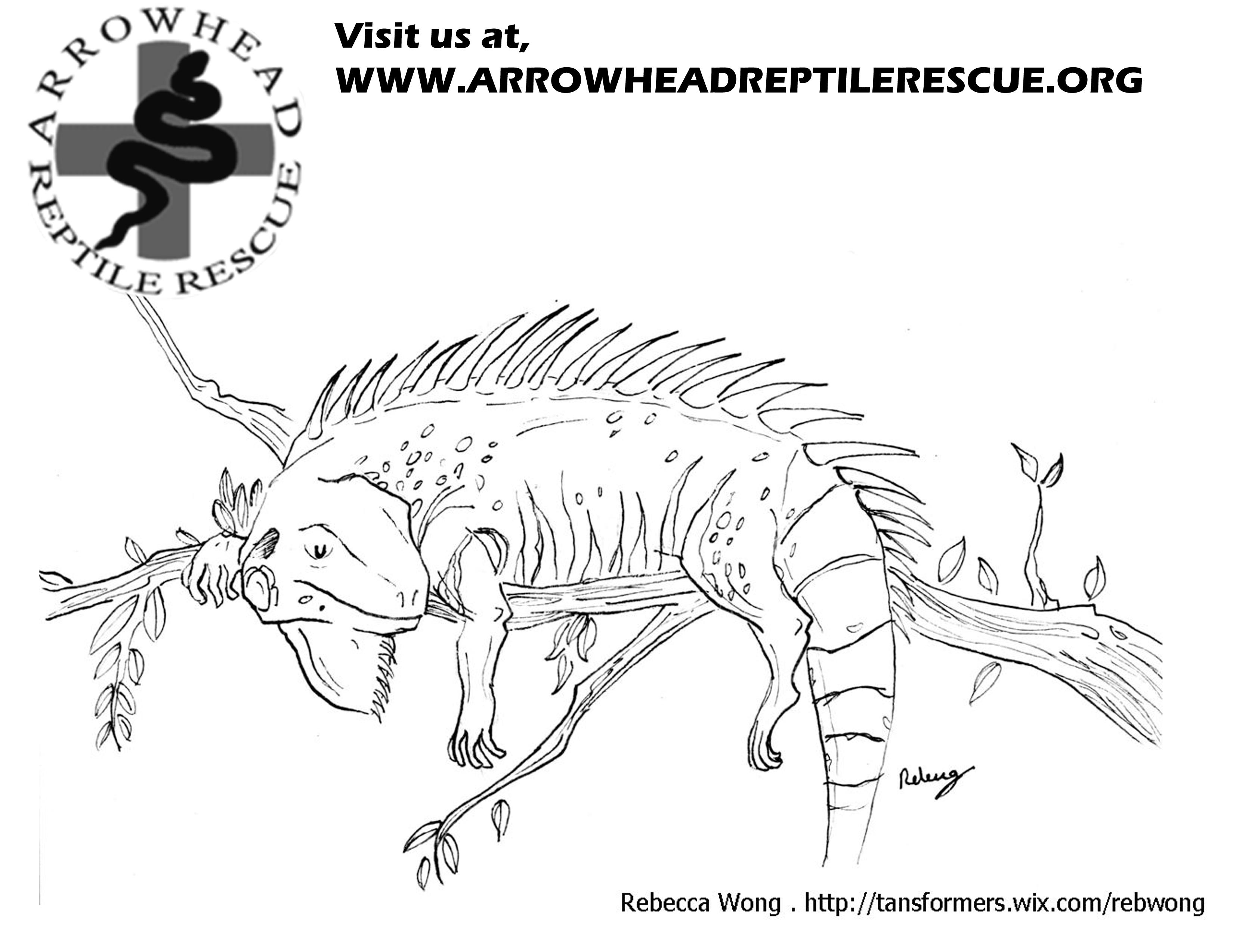 Green Iguana coloring #8, Download drawings