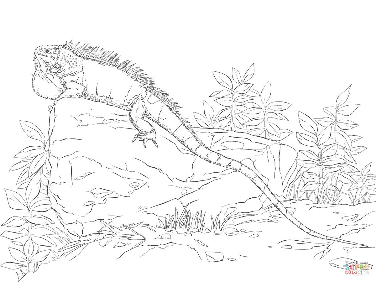 Green Iguana coloring #13, Download drawings