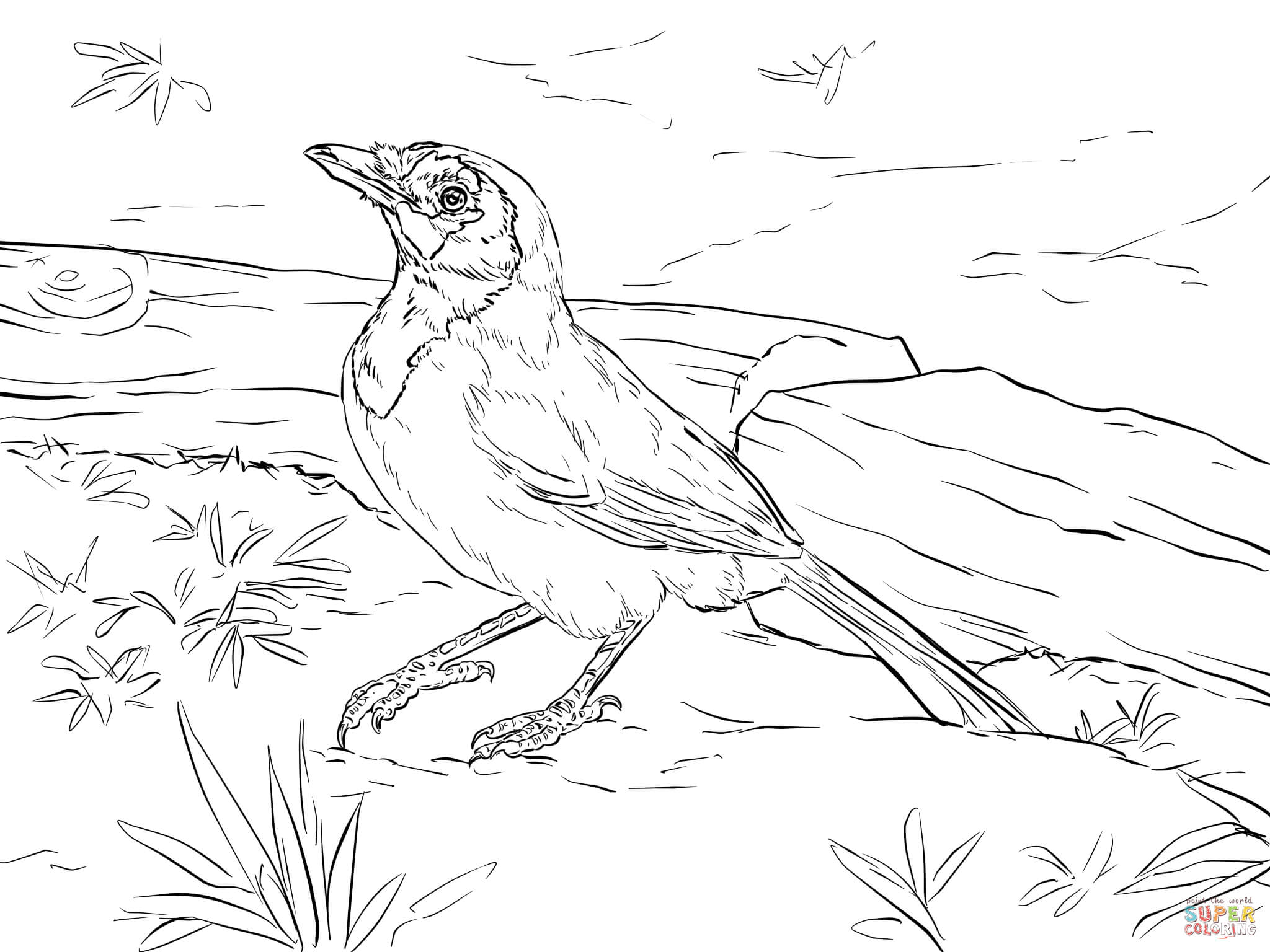 Green Jay coloring #10, Download drawings