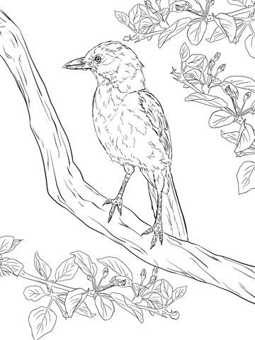Green Jay coloring #15, Download drawings